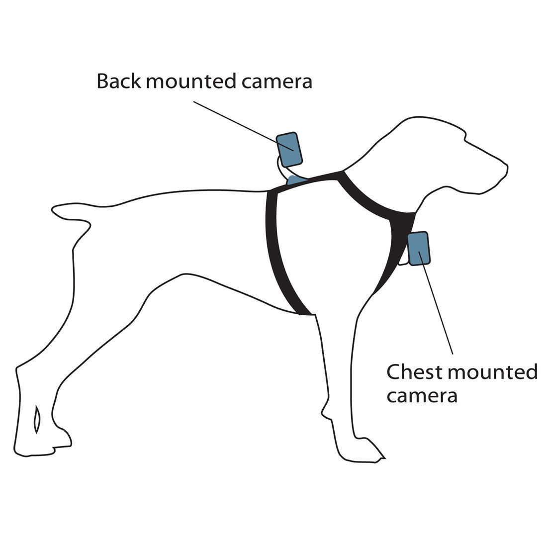 Kurgo Camera Mount Dog Harness S Xl