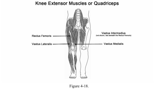 The Knee Anatomy And Function Part 3 Muscles Slahm Students