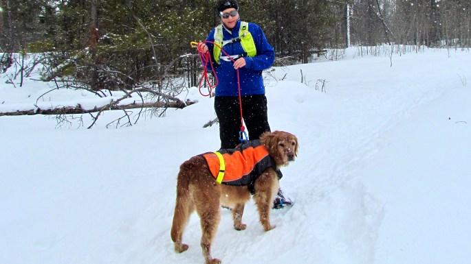 Aspen with wearing the EzyDog Element Dog Jacket