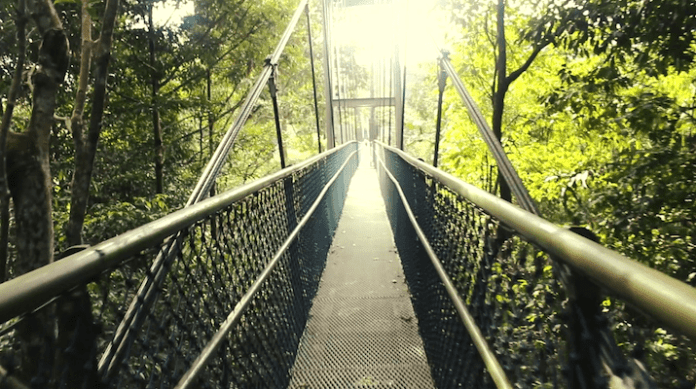 MacRitchie Reservoir TreeTop Walk Bridge