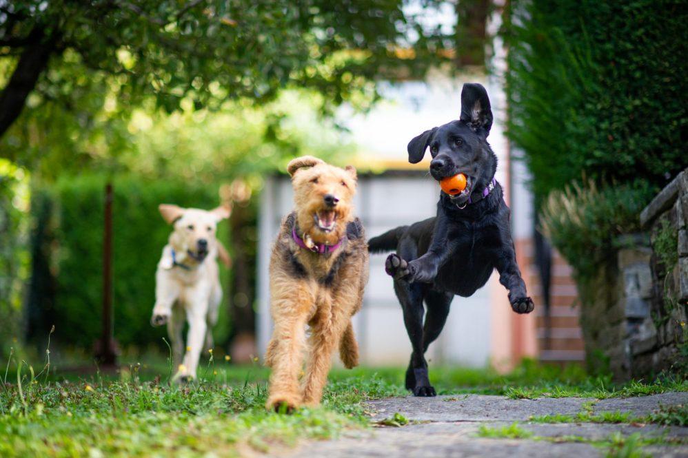 Basel und Region - Blindenhunde beim Spielen | auf baselundregion.ch