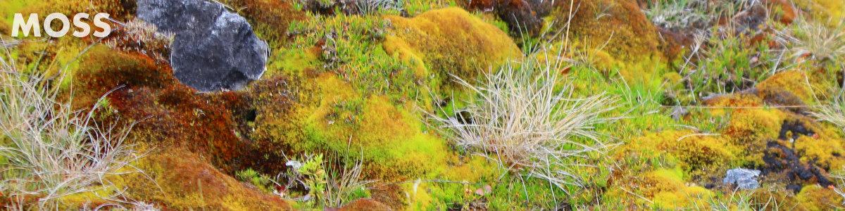 Mosses Plants