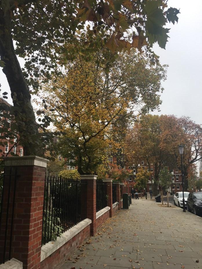 Fall foliage on a London street