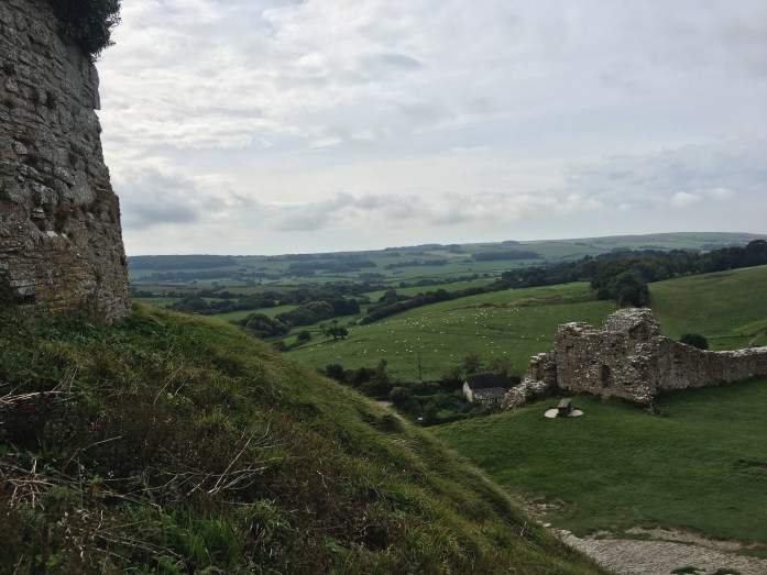 Sheep from Corfe Castle