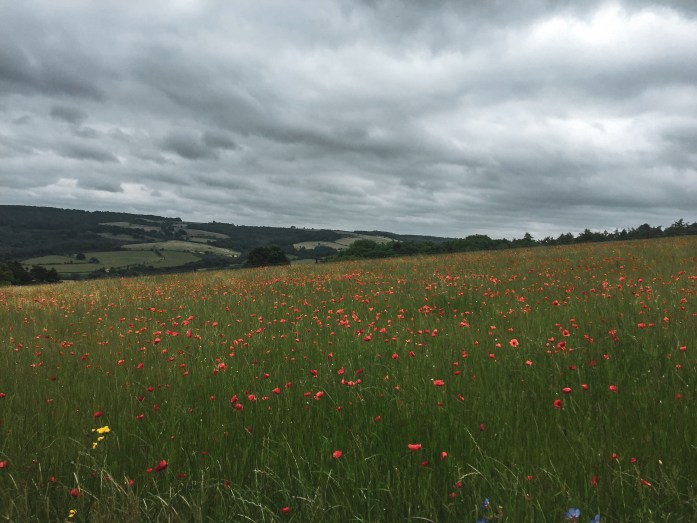 Poppies along the Cotswold Way