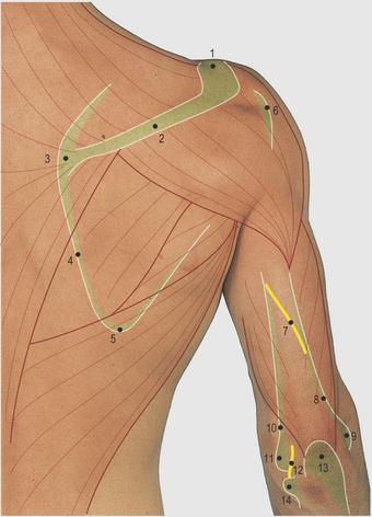 Limb   Basicmedical Key