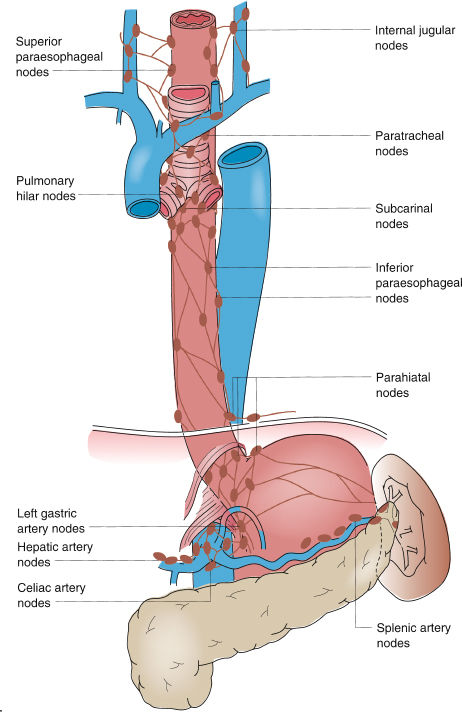 Esophageal Anatomy and Physiology and Gastroesophageal Reflux ...