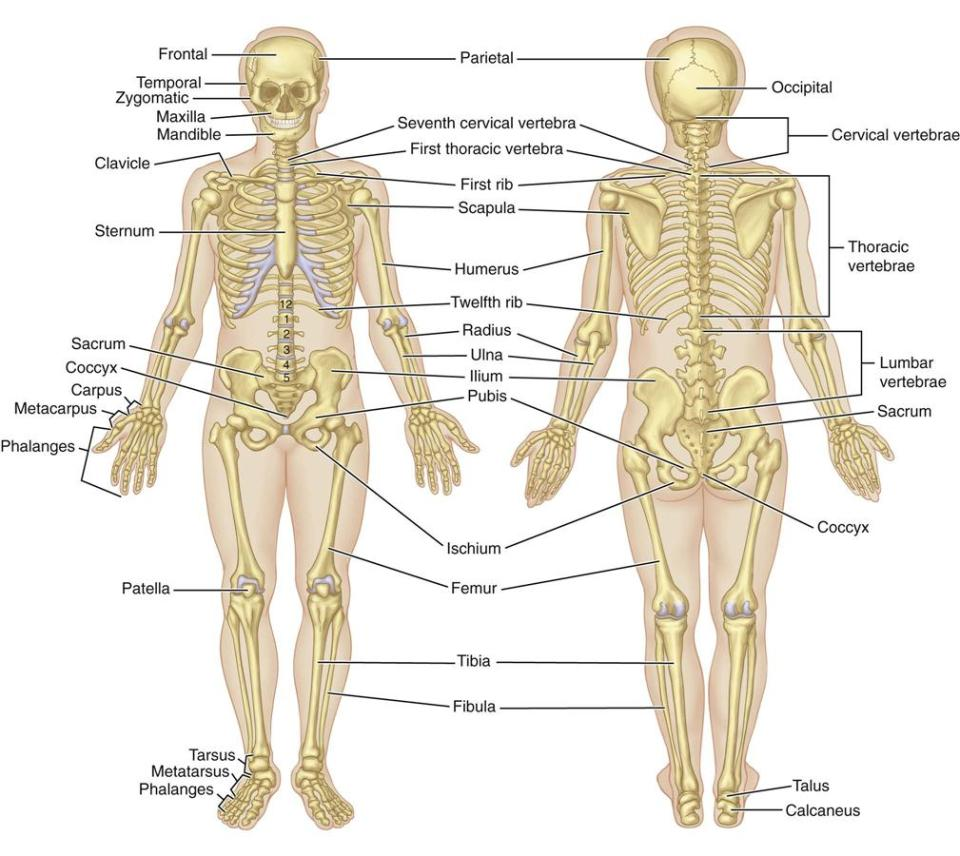 Diseases of the Musculoskeletal System and Connective Tissue