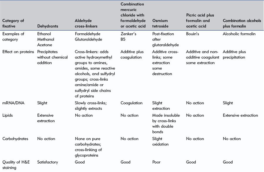 Fixation of tissues | Basicmedical Key