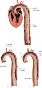 Topographical Anatomy
