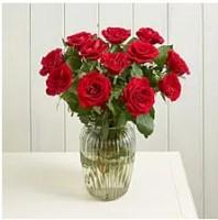 Red Roses Serenata Flowers