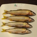 透著西瓜香氣的野生香魚