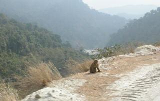 monkey_guard.jpg