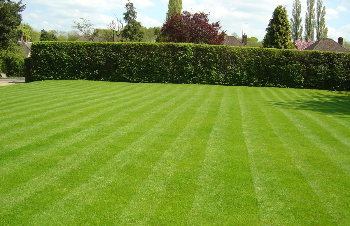 Image result for lawn