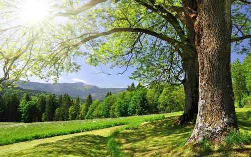 În prima zi din Anul Bisericesc creștinii se roagă pentru mediul înconjurător