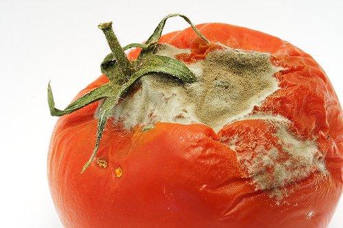 rotte-tomaat
