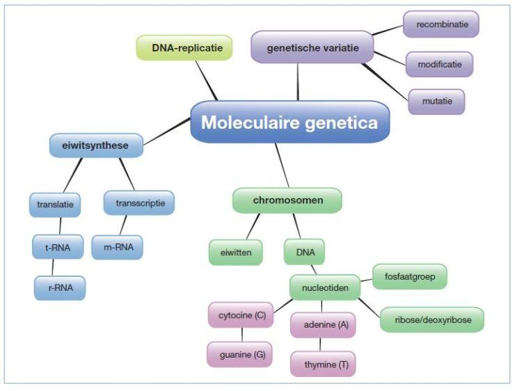 12 mol genetica