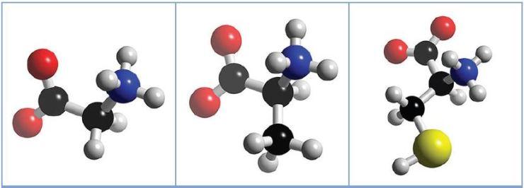 biomolecule2