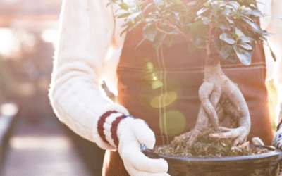 Keeping the Bonsai alive!