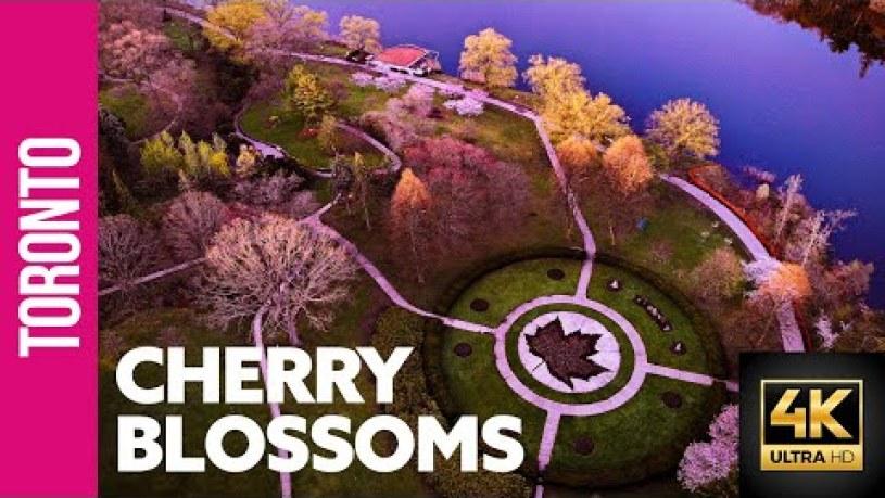 Who Designed High Park Toronto