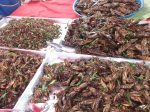 Fried_cockroaches_in_Thailand_market
