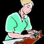 vet emergency in germany