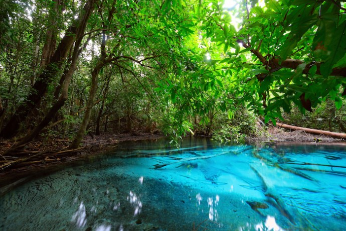 Discovery Cove Tickets, Prices & Tips