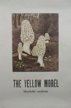 yellow morel