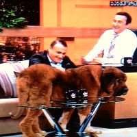 Koba Subeliani and his Caucasian Shepherd Dog 'Buka'
