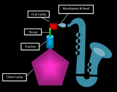 origins of tone diagram, saxophone, chest cavity, trachea, throat, oral cavity, mouthpiece & reed