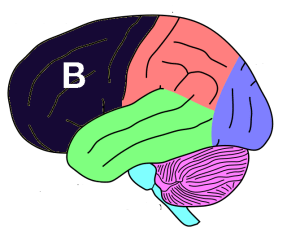 bootstrap your mind