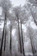 Bäume mit Wetterseite