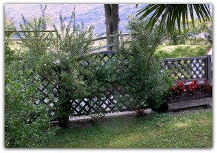 fences and plants