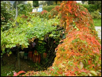layers of leaves...and pots!