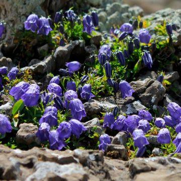Senderismo - El entorno natural