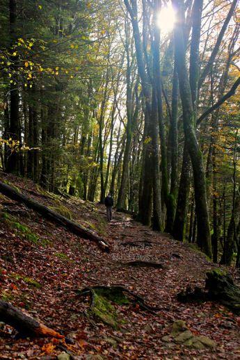 Primer tramo por bosque.