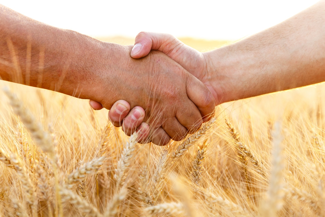 BASYS - Farmers handshake over the wheat corp, close up.