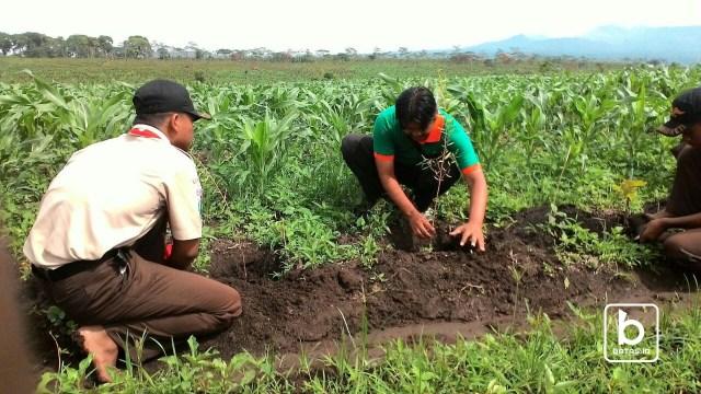 Penanaman tahunan saka wanabakti Kwarcab Ponorogo bersama Perhutani Madiun Selatan/ Foto : Wahyu Priyanka Adji/batas.id