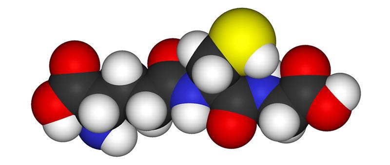manfaat beras hitam untuk diet - tinggi antioksidan