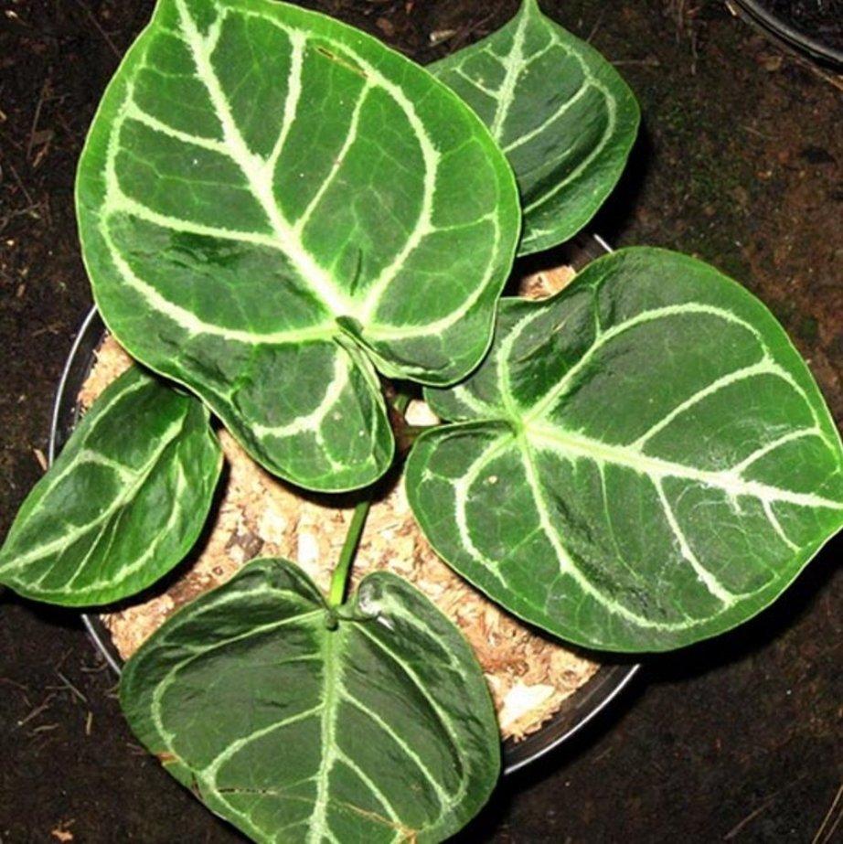tanaman cantik penghias teras rumah