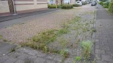 nederland wordt groen 3