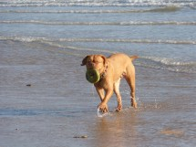 Toff on Camber (12)