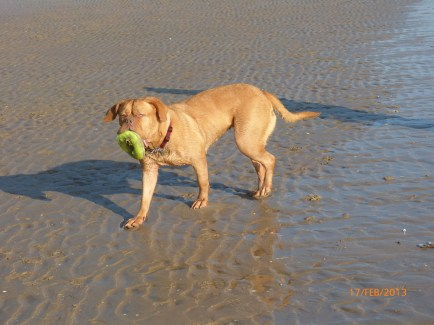 Toff on Camber (3)