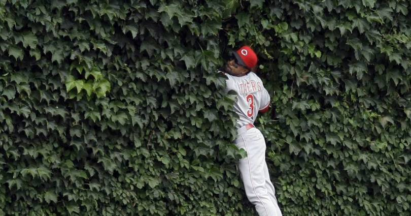 Ivy-clad walls at Wrigley Field
