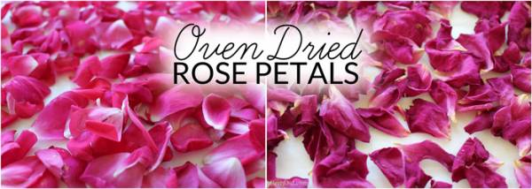 How-to-Dry-Rose-Petals-Bren-Did1