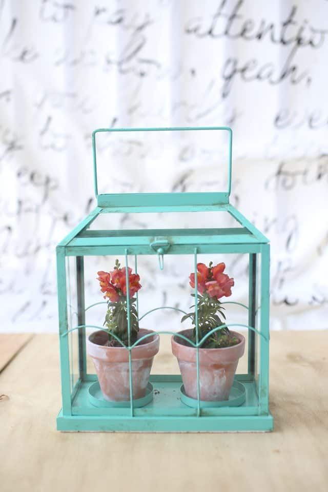 A DIY terrarium made from a candle holder.