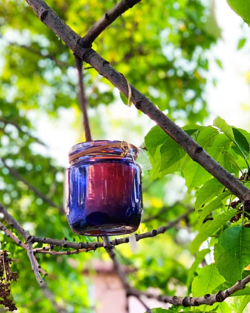 Blue mason jar candle hanging from a branch.