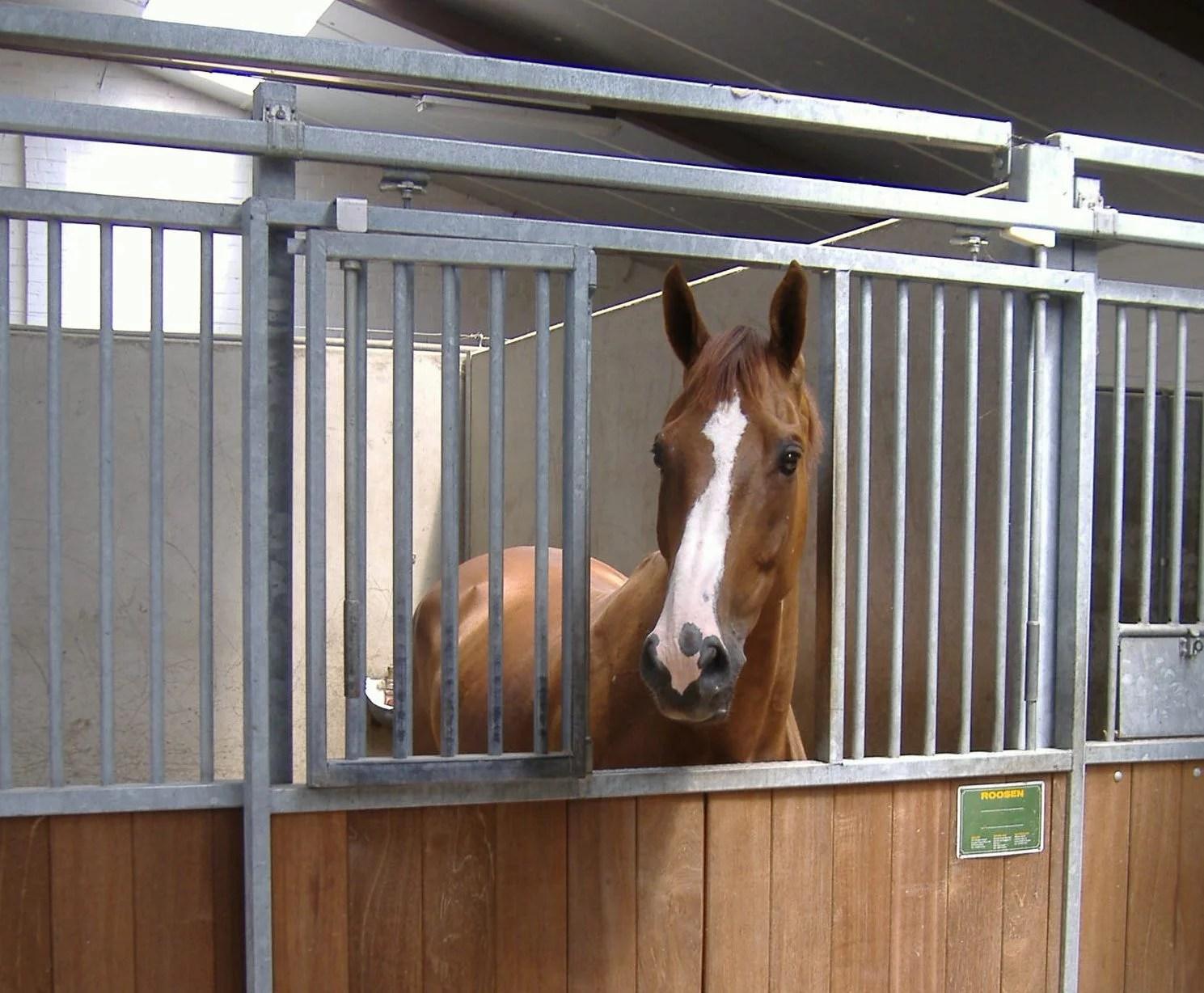 Boxe pour chevaux