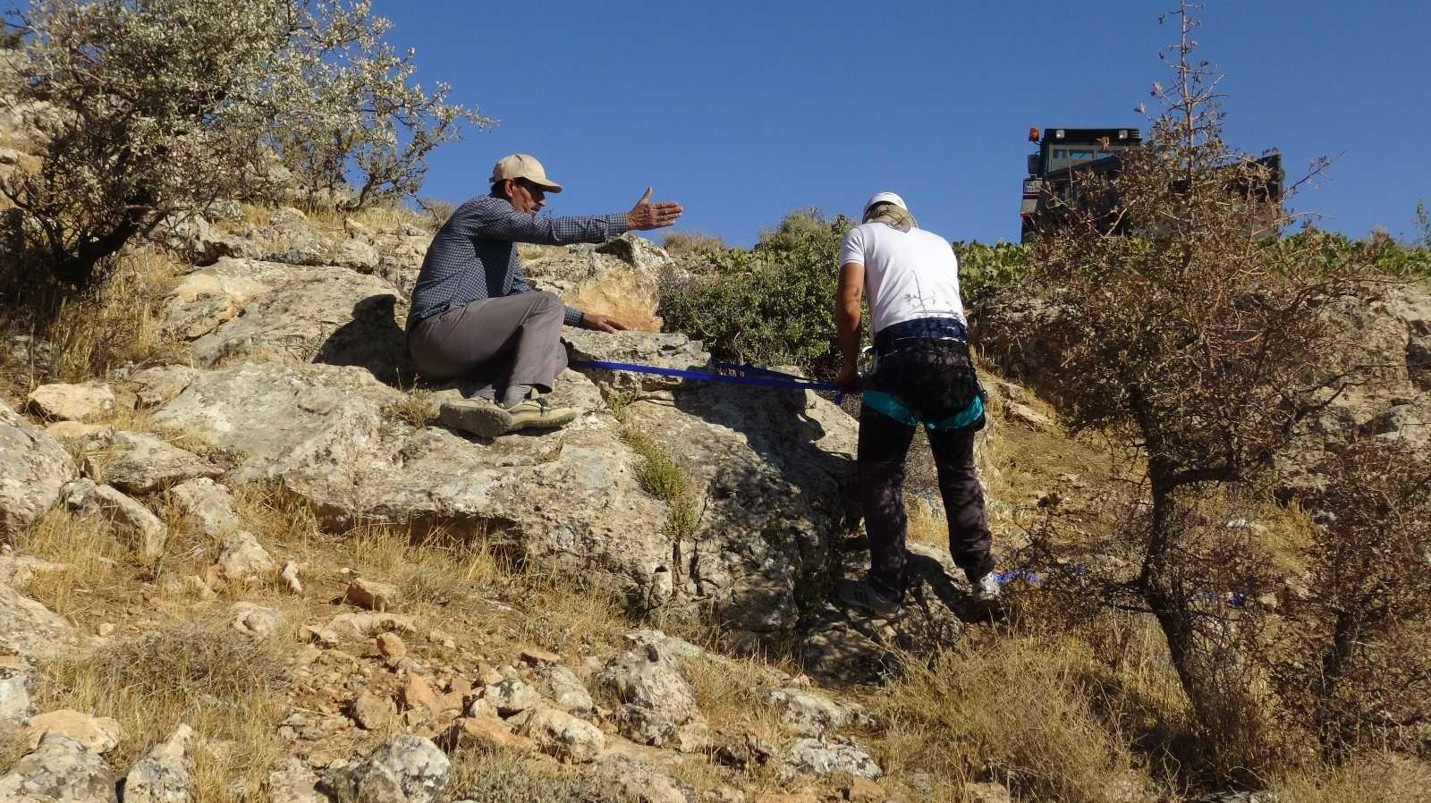 Tehlikeye aldırmadan uçurumlardan kaya balı topluyorlar