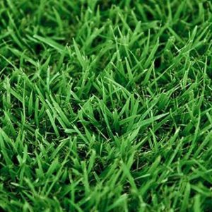 Palisades zoysia grass sod